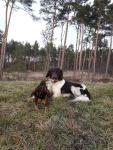 Lotte und Murphy