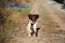 Murphy bei der Jagd