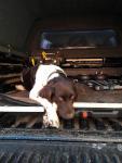 Murphy im Auto